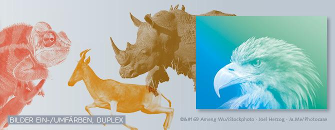Beispiel wie Bilder ein- und umgefärbt werden sowie ein Duplexbild